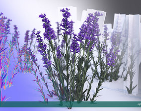 3D asset Lavender LOW POLY very detailed