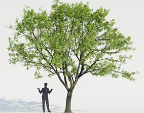 Common Tree 2 3D model