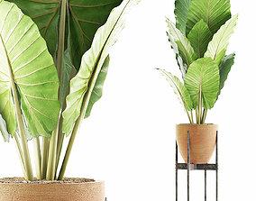 Plants Collection 56 3D model