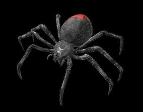 3D asset Black Widow Spider Rigged