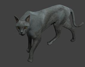 Gray cat 3D model