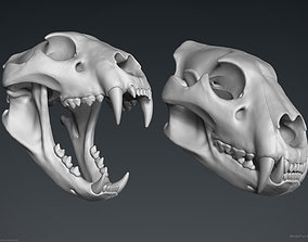 anatomy 3D Lion Skull - Sculpture