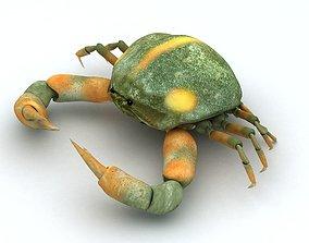 3D asset Crab Pyrhila pisum