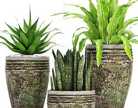 trifasciata Plants collection pot 3D model