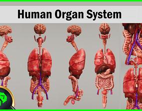3D asset Human Organ System