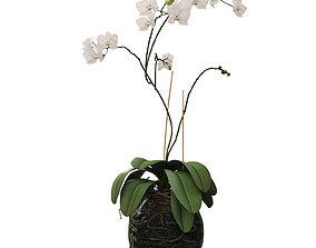 greenery Orchid in a glass flowerpot 3D model