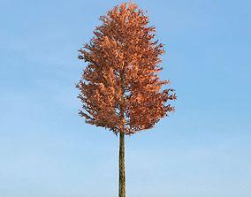 3D model Broad Leaf Tree In Fall Season