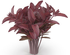 Red amaranth Bunch 3D model