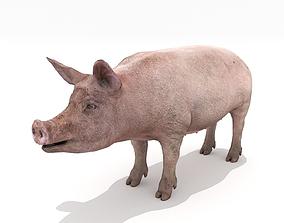 3D model Pig - Realistic
