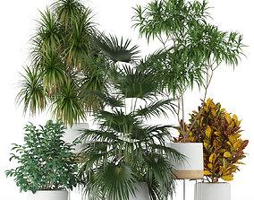 Plants collection 203 3D pot-plant