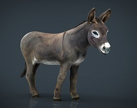 Realistic Donkey 3D asset