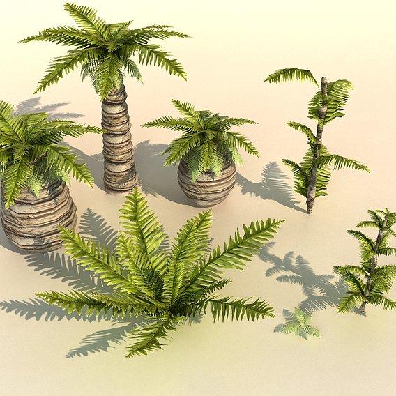 plant tropic Palm