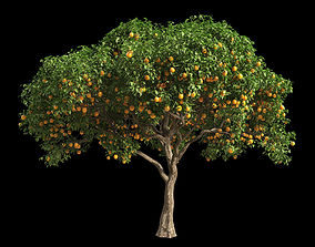 Orange Tree 7 3D model