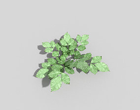 Low poly Plant weed 3D asset game-ready