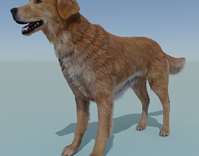 3D model Dog Golden Retriever Rigged