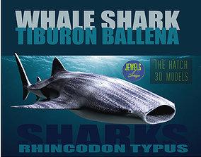Whale Shark Rhincodon 3D model