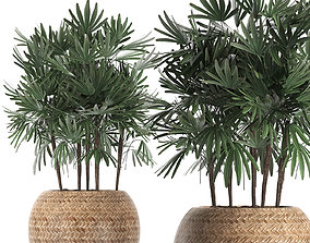Decorative palm tree in a pot 416 3D