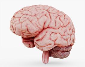 Halloween Brain 3D asset