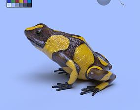 Harlequin Poison Dart Frog 3D model