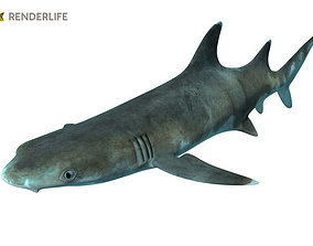 3D Reef shark with animations