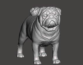 Pug Dog 3D printable model highdetaildog