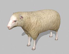 3D asset sheep