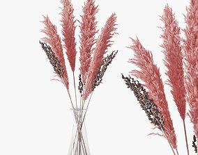 Pampas grass 04 3D model