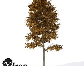 3D XfrogPlants Autumn European Beech
