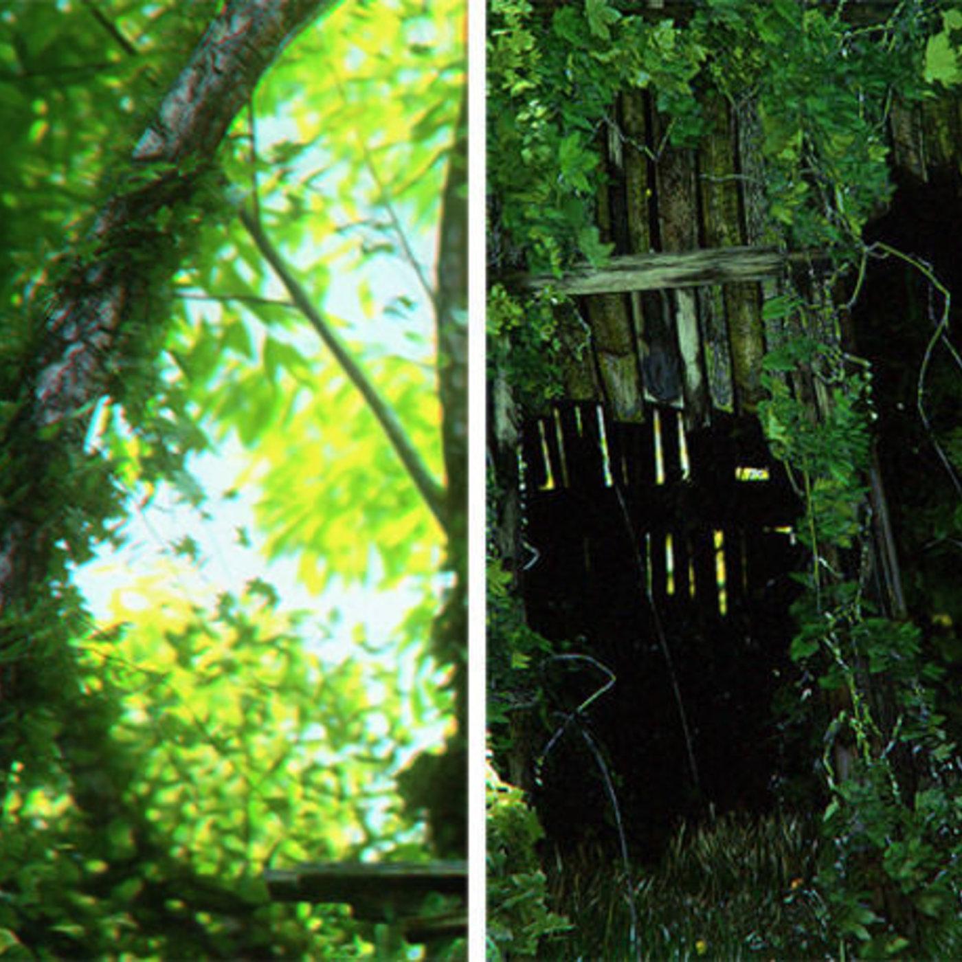 Forgotten Forest