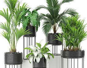 3D model Plants collection 365