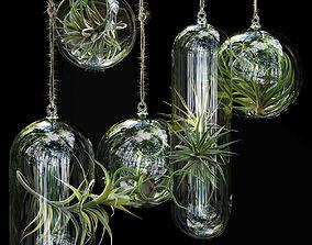 Hanging Air Plants 3D model