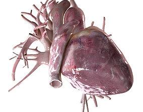 3D Human Heart Beating High Quality