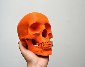 3D printable model Simplified Human Skull