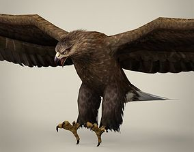 Game Ready Realistic Eagle 3D model