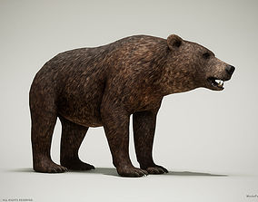 3D model Brown Bear game ready PBR