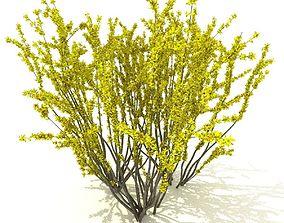 3D model Forsythia
