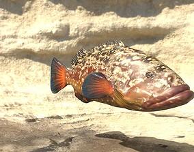 animated Grouper photorealistic sea fish 3d model Rigged