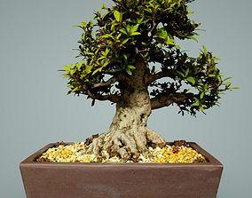 3D asset low-poly Bonsai Tree