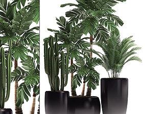 3D model Decorative plants in flower 4