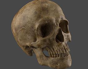 Human Skull 3D model skull