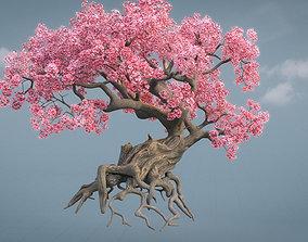 Ancient cherry blossoms or Sakura or Prunus 3D model