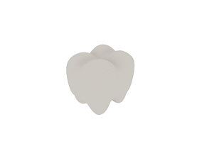 3D model A teeth