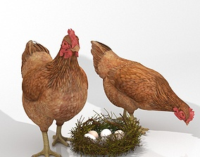 Chicken with eggs in Nest 3D