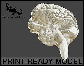 Printable accurate human brain
