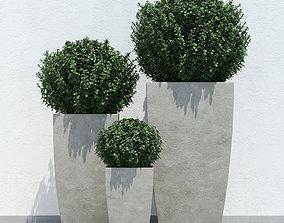 Plants 3D model tree