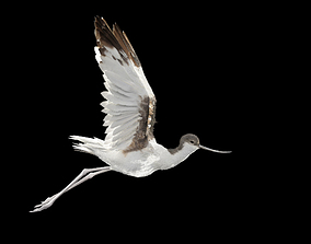 Realistic Avocet rigged animated bird with feather 3D