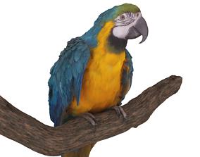 3D model Ara Macaw