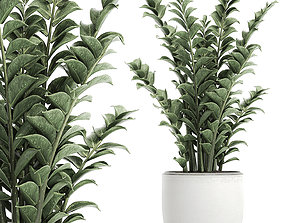 Zamioculcas in pots for the interior 616 3D