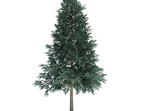 Evergreen Conifer Tree 3D