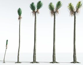 EVERYPlant Ovate Sigillaria EXT --24 Models-- 3D